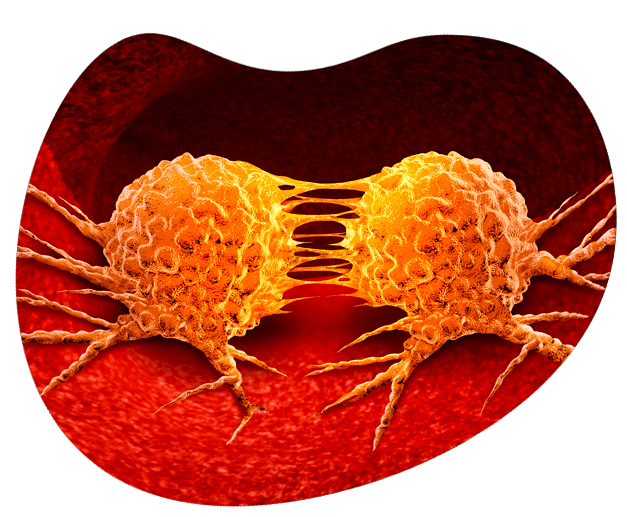 elenavet-cancer-min